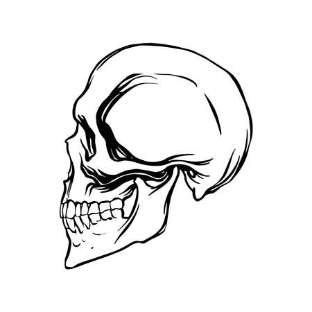 Side view of a human skull in a linear style. Vector illustration.