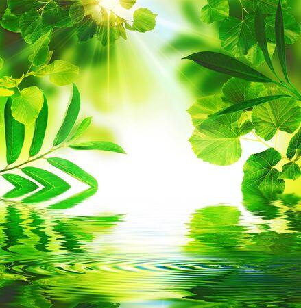 Undergrowth evoking freshness and light.