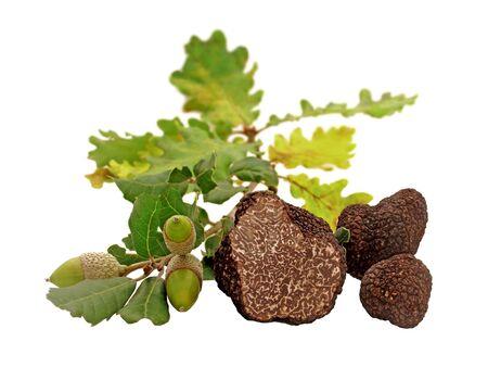 Truffes, feuilles et glands isolés sur fond blanc.
