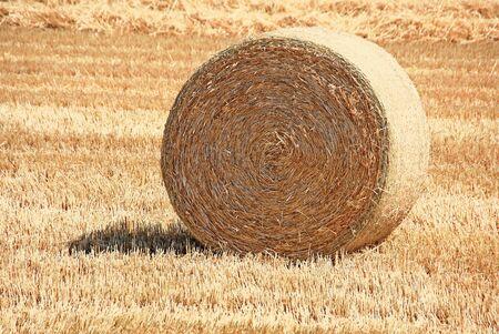 Golden straw bale in summer field.