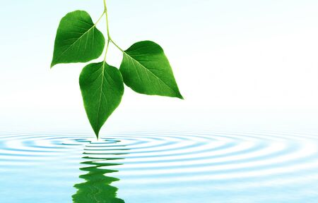 Leaves on limpid water symbol of natural purity.