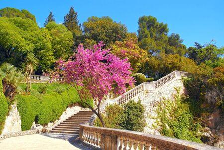 Flowering at the Jardins de la Fontaine in Nmes, France. Banque d'images