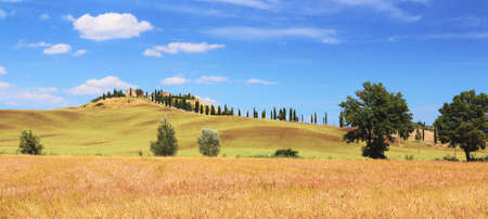 Cereal crops and cypresses on the hills of the Siena region. Tuscany.