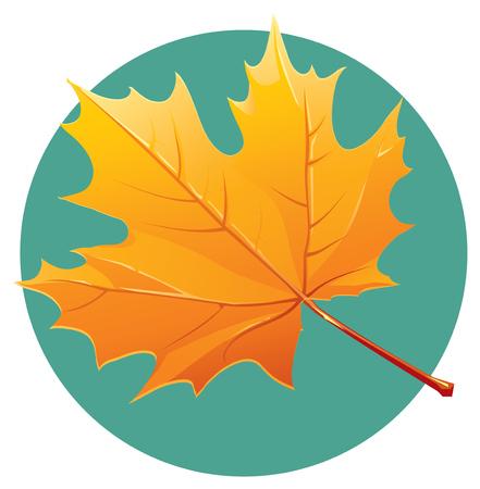 fall leaf: Yellow maple leaf illustration