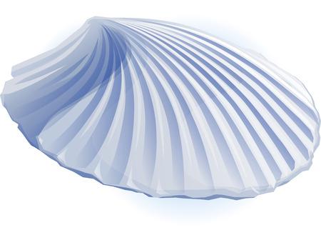 petoncle: Sea pétoncle illustration réaliste Banque d'images