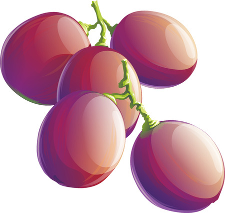 Realistic illustration of purple grape bunch. Isolated on white background.