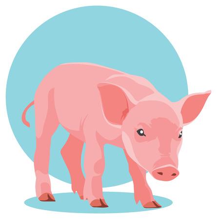 suckling: illustration of pink suckling pig on blue background