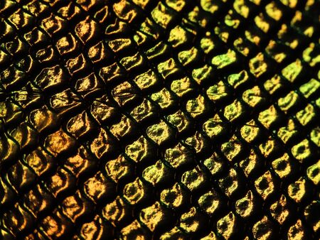 Background texture: light from various angles on a crocodile pattern embossed holographic surface creates different colors, selective focus area changed for each photo. Gold brown, green.