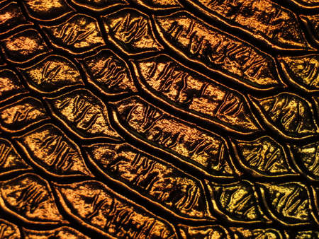 Background texture: light from various angles on a crocodile pattern embossed holographic surface creates different colors, selective focus area changed for each photo. Gold brown.