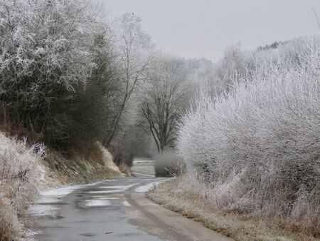Winter landscape with old country road and frost covered shrubs and trees on both sides, misty day in Kirchberg, Luxembourg