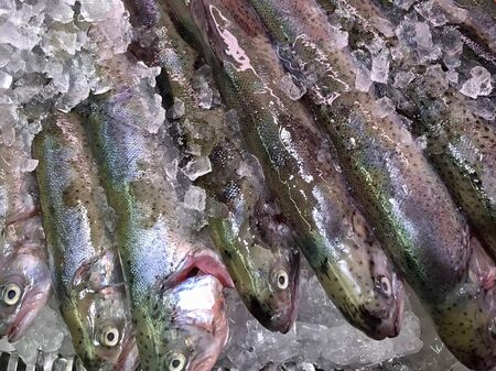 Fresh trout displayed on ice in a shop ready for sale
