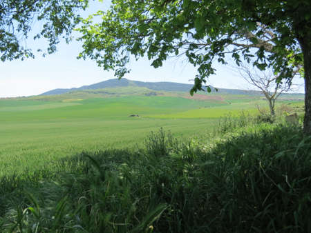 Agricultural landscape with green fields and mountains in sunny summer day, Navarra, Spain