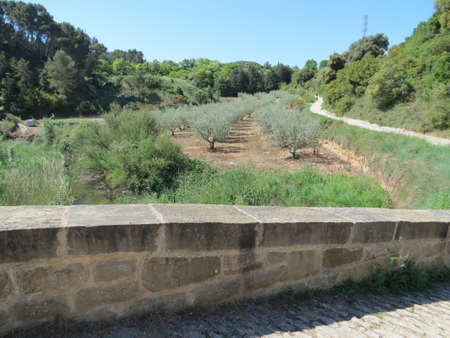 Agricultural landscape with olive trees and roman bridge in sunny summer day, Navarra, Spain