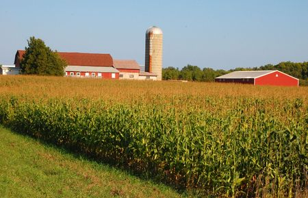 silo: A farm with its barns and silos sits atop a hill where corn is ready to be harvested.