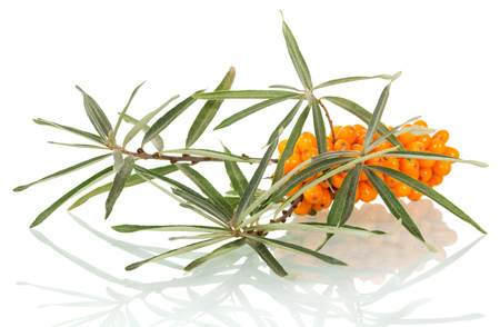 seabuckthorn: Bunch of ripe sea-buckthorn berries with leaves isolated on white background.