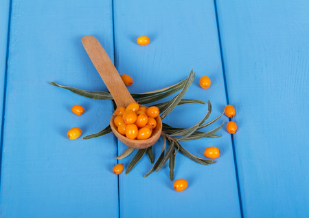 seabuckthorn: Ripe sea-buckthorn berries in a spoon, leaves on a tree colored in blue background. Stock Photo