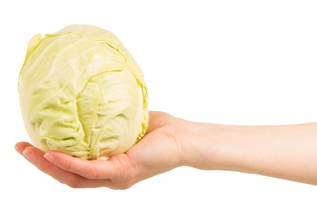sparingly: Cabbage head in a female hand isolated on white background.