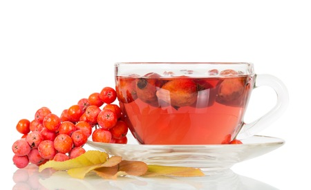 briar: Rowan berries and rosehip tea cup isolated on white background. Stock Photo