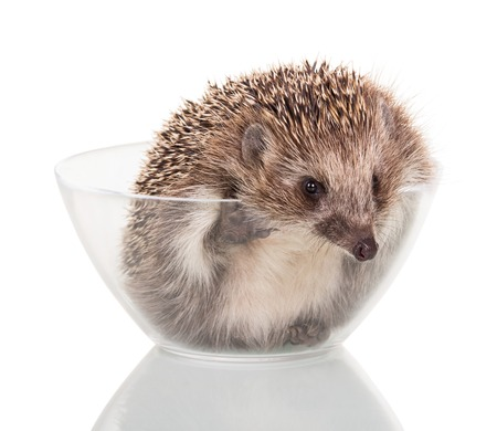 Funny little animal trying to get out of glass bowl, isolated on white background