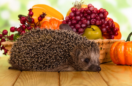 Bright autumn fruits and vegetables in the basket and hedgehog on wooden table