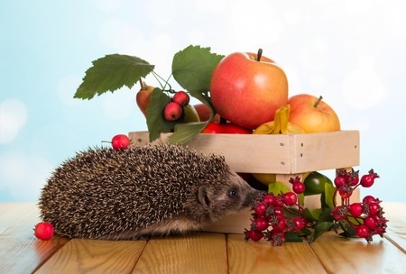 Box with fruits and vegetables and funny gray hedgehog on wooden table