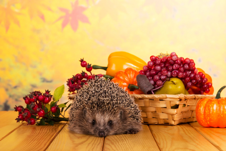 Funny gray hedgehog sits on wooden table, next to basket of fruits and vegetables