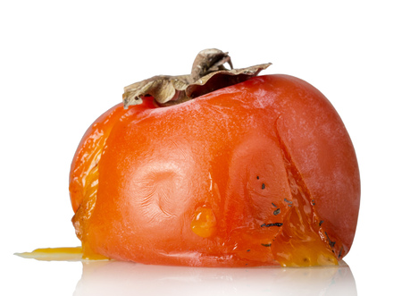Spoiled rotten persimmon fruit isolated on white