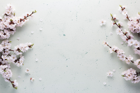 Top view. Branches of fragrant flowering apricots on abstract light background