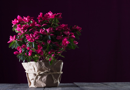 Beautiful bright bouquet of red azaleas on the boards on a dark background