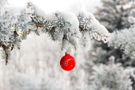 Little Christmas toy ball hangs on a snow-covered pine branch. Background