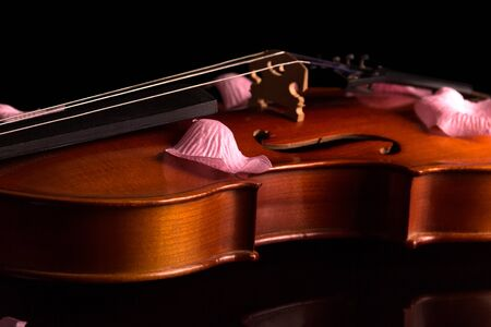 The violin is stringed musical instrument, and rose petals on top, isolated on black background Reklamní fotografie