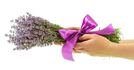 Bunch of lavender with ribbon in womans hands isolated on white background