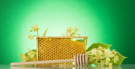 Frame with bee honeycombs, wooden spoon for honey and Linden branch, on light green background