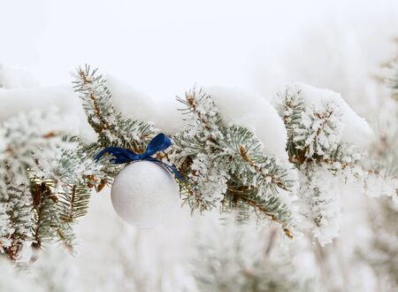 Snowy Christmas pine branch and white ball with blue bow. Background