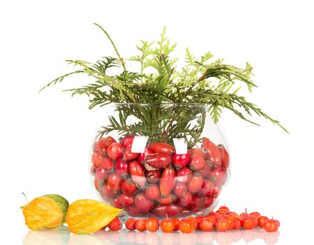 Fresh rose hips in glass bowl, next to scattered Rowan berries and physalis isolated on white background 版權商用圖片