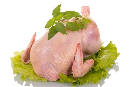 Carcass raw chicken on lettuce leaves, isolated on white background