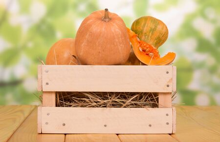 Drawer full of large pumpkins, cut the top piece with seeds on light green background