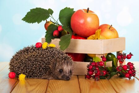 On table prickly hedgehog and fruit in box, on light blue background