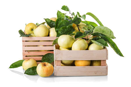 Juicy fresh yellow apples in wooden boxes isolated on white background