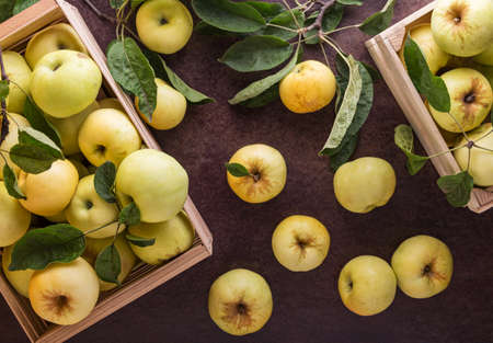 Top view. Fresh apples of Antonovka variety with leaves in wooden boxes on the table