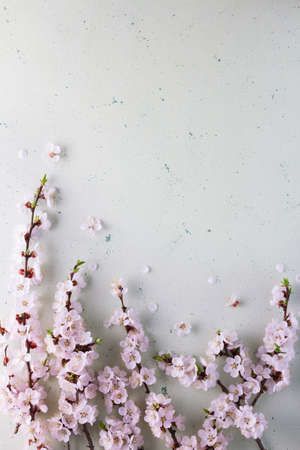 Spring branch of blooming apricots on a light background