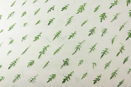 Top view. Fresh arugula leaves are laid out on a light background