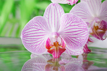 Close up. Bright beautiful orchid flower over water with reflection