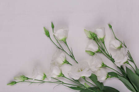 Top view. Beautiful bouquet of white eustoma on a light background
