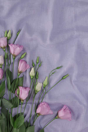 Fresh multicolored eustoma flowers on a blue background in a fold. Place for inscription