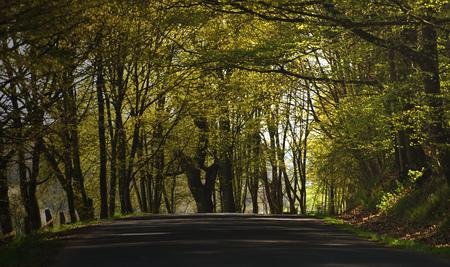ceske: Forest path in spring time in mountains Ceske Stredohori