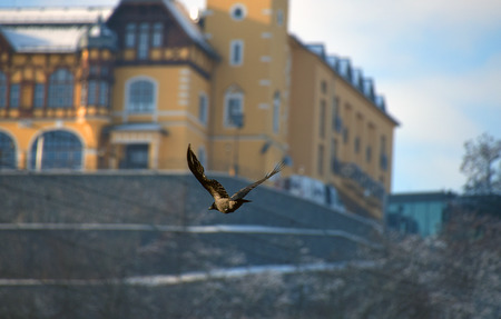 nad: Castle Vetruse with bird in town Usti nad Labem Stock Photo