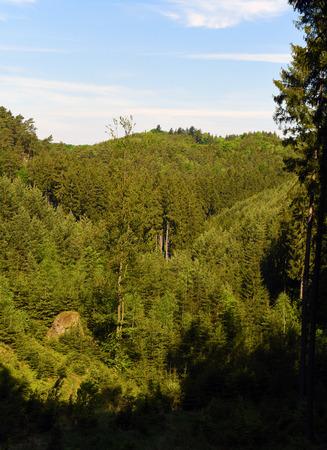castles needle: Green landscape near Kokorin castle in spring time