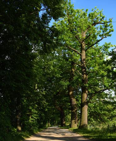 ceske: Dam with oak trees near Vrbenske ponds in summer time