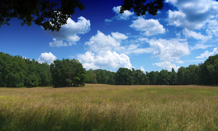 castles needle: Sunny day near Zahradky village in summer time